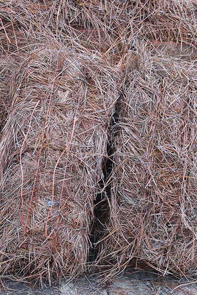 Pine Straw For Sale